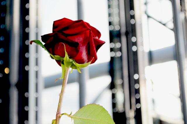 mercredie-blog-mode-georges-beaubourg-rose