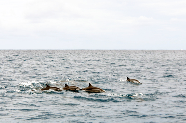 mercredie-blog-mode-voyage-ile-maurice-avis-trip-conseils-guide-dauphins-nager